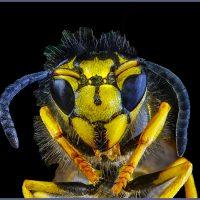 Wasp - Neal Thompson