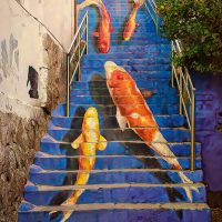 Fish Ladder - Andi Shapiro