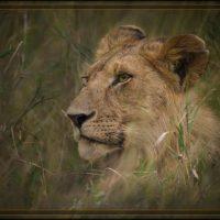 Royalty - Judy Lanier