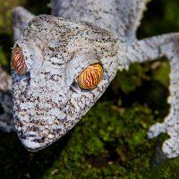 Gecko - Howard Hunt
