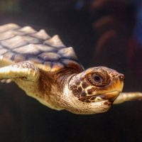 Turtle - Mark Huddleston