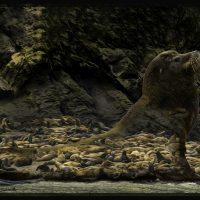 Sea Lion Indigestion - George Peterson